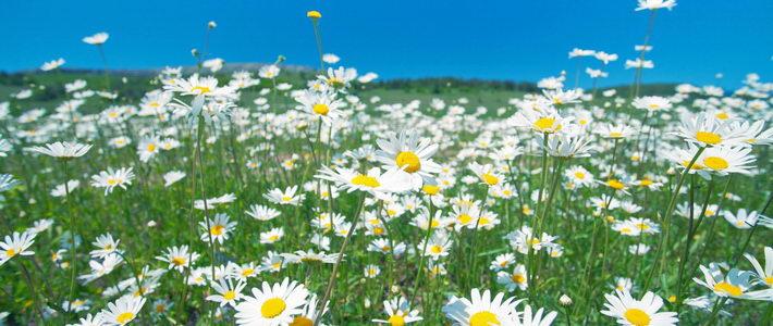 היסטוריה של הפרחים